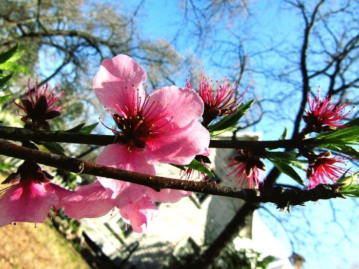 Flower Still Life Beauty In Nature
