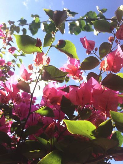 Growth Freshness Nature Day Close-up Tree Low Angle View Beauty In Nature Fragility Flower Outdoors No People Sky