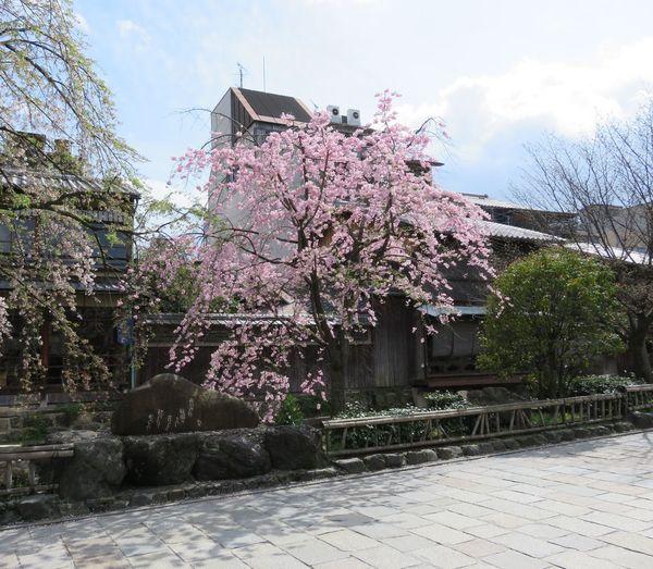 Flower View