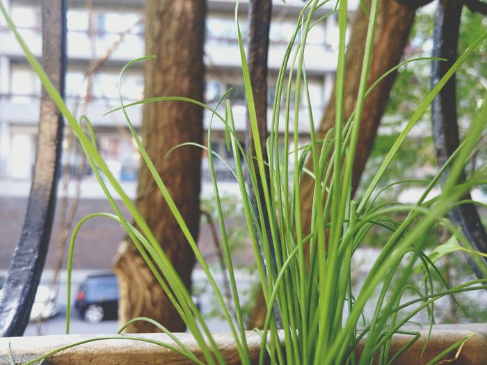 Plant Citygarden Montrealcity MTL Green Color