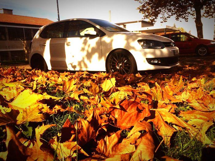 Fall VW Polo