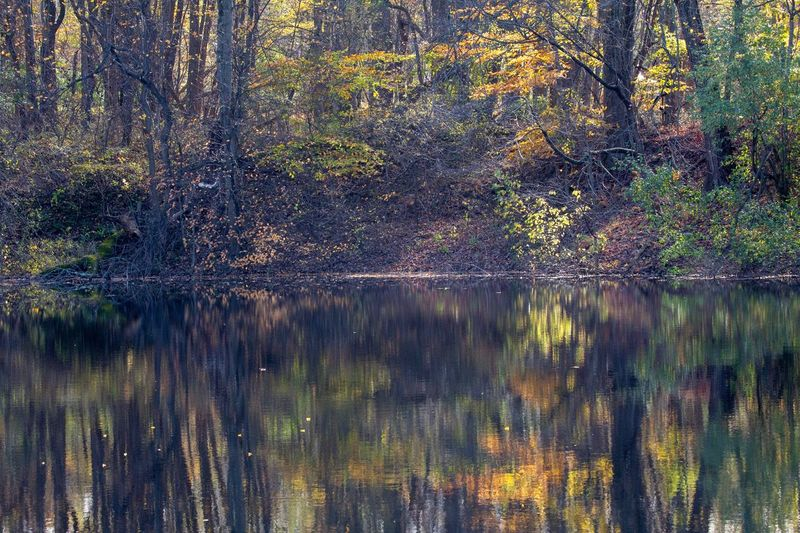 Autumn Reflections Canon EOS 60D No People Full Frame Tree Backgrounds Water Nature Plant