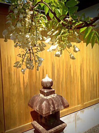 Kyoto Japan Sho-gunzuka Seiryuden Asebi Flower StoneLantern Today 京都 日本 将軍塚 青龍殿 馬酔木 石灯籠 今日