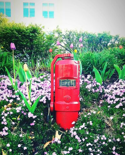 Red No People Grass Outdoors Day Flowers Plants Fire Hydrant Close-up Green Color Nature Great Day Out Follow_me Tulips Flowers Tulips