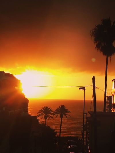 Good Morning My Year My View Dramatic Sky Palm Tree Paint The Town Yellow