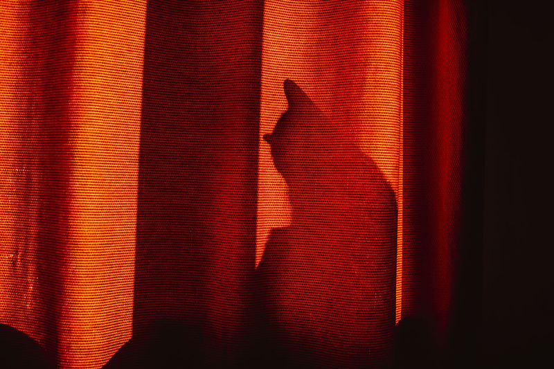 Shadow of cat seen through curtain