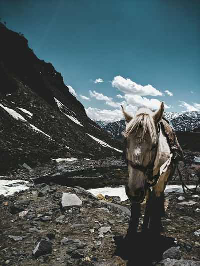 Rear view of horse standing on snow covered mountain