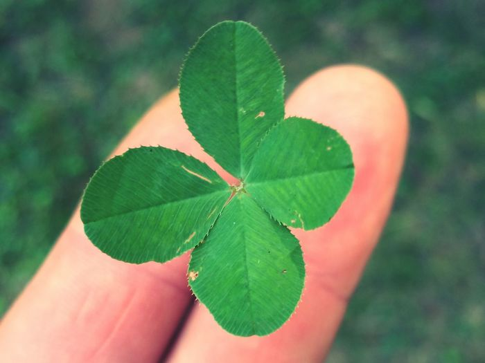 Un po' di fortuna... Quadrifoglio Quatrefoil Luck Fortuna Green Udine Friuliveneziagiulia Friuli Venezia Giulia Italia