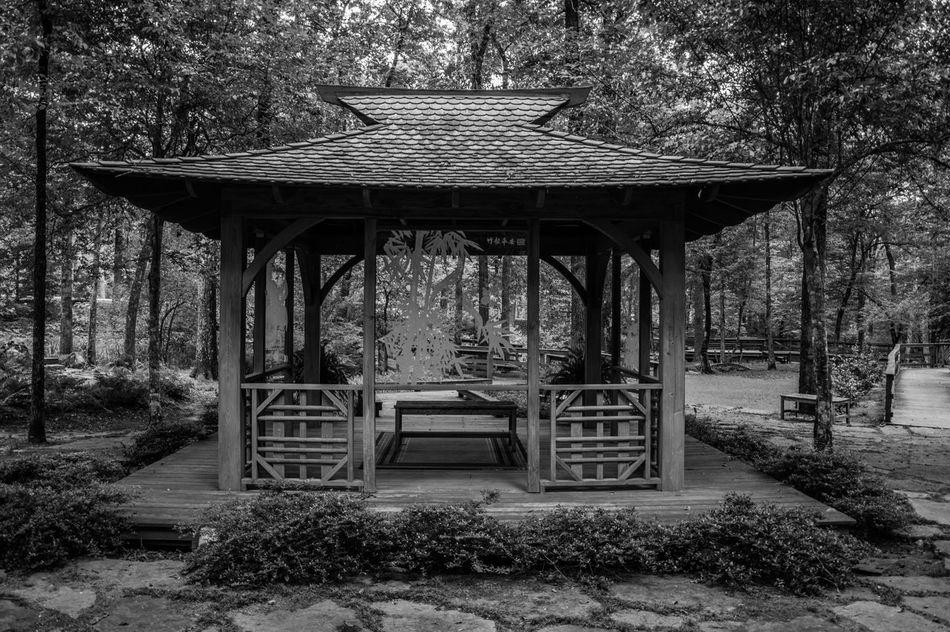 Black & White Gazebo Gazebo At The Park Path Architecture Black And White Black And White Photography Built Structure Contrast Day Forest Gazebo And Nature Growth Nature No People Outdoors Shelter Tree Zen