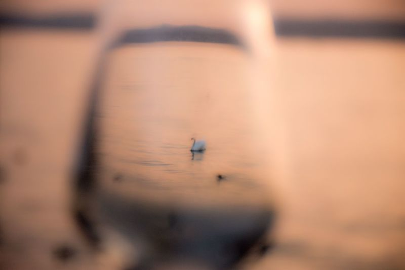 Sunset_collection Glass Art Glass Swan No People Selective Focus Animal Themes Close-up Flying Animal Wildlife Animal Animals In The Wild One Animal Outdoors Transportation Bird Water Motion