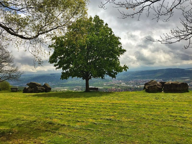 First Eyeem Photo Tree Nature Nature_collection Swabian Alb