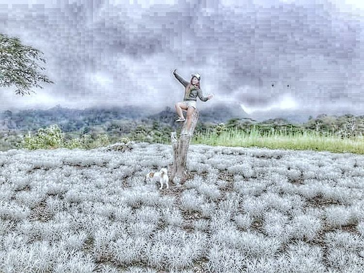 Idelweiss Flowers Beautiful Nature Temukus Village View Tree One Animal Dog Walking Sky Day Outdoors Cloud - Sky Beauty In Nature No People Animal Themes likeforlike #likemyphoto #qlikemyphotos #like4like #likemypic #likeback #ilikeback #10likes #50likes #100likes 20likes likere likeforlike #likemyphoto #qlikemyphotos #like4like #likemypic #likeback #ilikeback #10likes #50likes #100likes 20likes likere likeforlike #likemyphoto #qlikemyphotos #like4like #likemypic #likeback #ilikeback #10likes #50likes #100likes 20likes likere Likeforfollow Likesforlikes Good Morning! Instagood Ilovethisplace Balı Island Girl