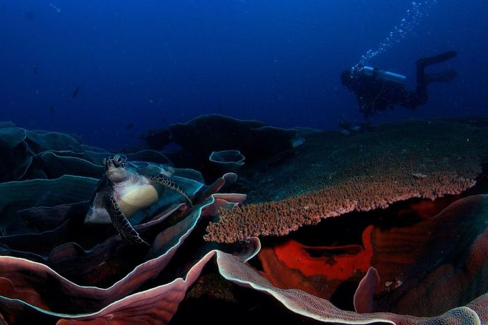 My Great Moment when i dive in Waka(Tomia)bi,Arround 27 Meters at Southeast Sulawesi,Indonesia