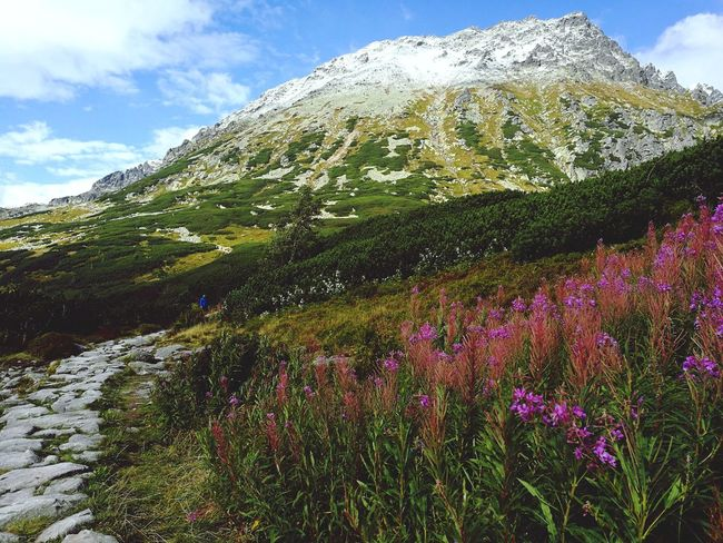 Tatry Poland Flower Nature Beauty In Nature Day Cloud - Sky Outdoors Growth No People Plant Sky Low Angle View Mountain Scenics Freshness Tatrymountains Tatra Mountains Landscape Beauty In Nature Tatry Grass