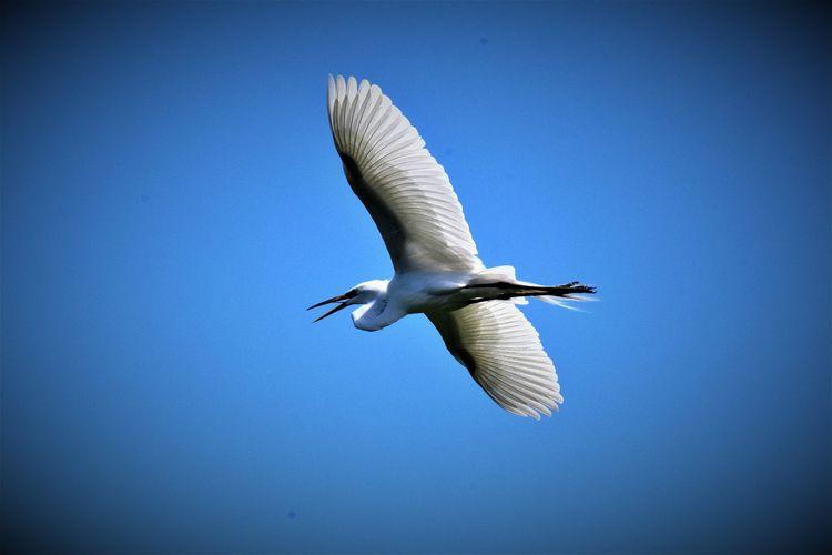 Egret's eye