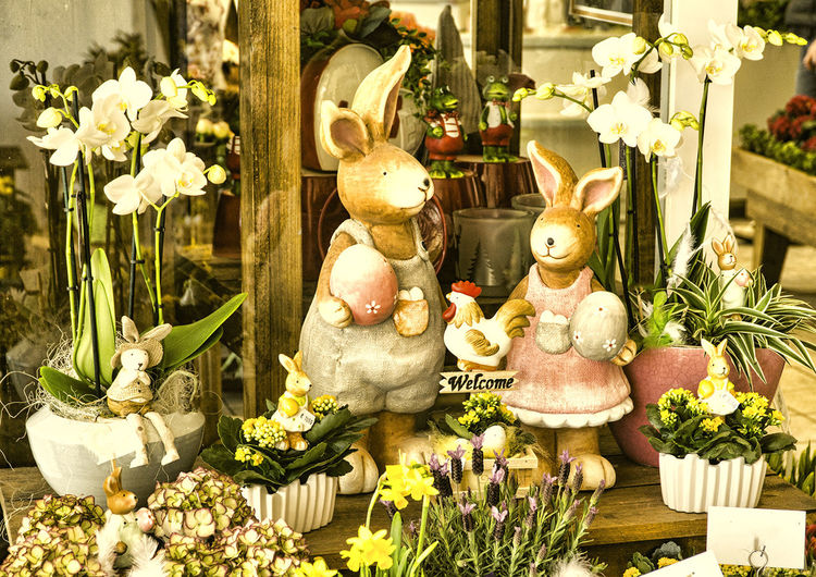 Frohe Ostern, Vrolijk Pasen, Pascua feliz, Happy Easter Arrangement Bouquet Conejo De Pascua Creativity Decoration Easter Easter Bunny Easter Ready Flower Flower Pot Fragility Freshness Indoors  Nature Osterhasen Ostern Paashaas Pascua  Pasen Plant Potted Plant Variation