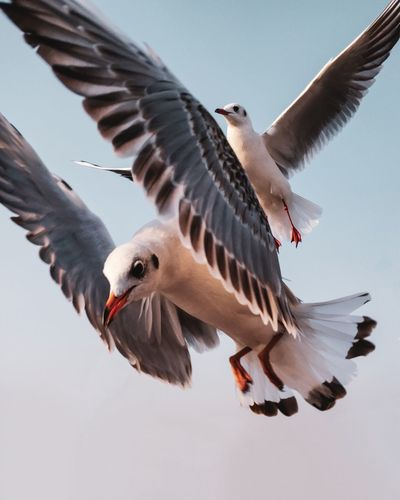 Free as a bird to settle where I will!! 🐦 Seagull Beach Sea Bird Spread Wings Flying Animal Wing Close-up The Mobile Photographer - 2019 EyeEm Awards