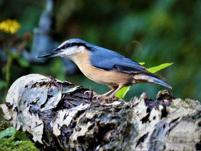Close-up of bird perching on dead tree