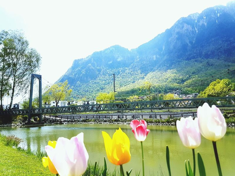 Outdoors Scenics Nature Water Flowers Flower Head Railway Bridge Tulips Tulip Beauty In Nature No People Clear Sky Lake With Mountains Switzerland Lake Geneva Region The Great Outdoors - 2017 EyeEm Awards Been There.