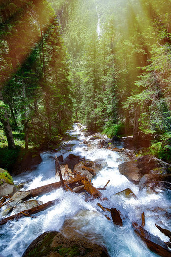 A stream in the forest. Tree Forest Water Beauty In Nature Plant Land Scenics - Nature Flowing Water Motion Nature Tranquility Long Exposure Day No People Flowing Rock River Non-urban Scene Stream - Flowing Water Outdoors WoodLand Power In Nature Stream Waterfall