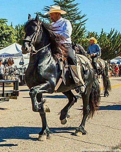 I Love Horses Beautiful Horse I Love 💜 Caballos My Life Horses My Passion Horse Riding 😚