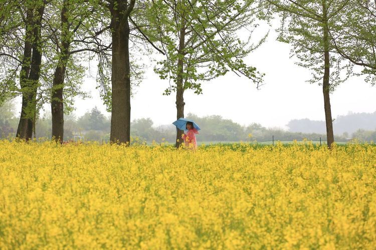 Woman with umbrella standing by yellow flowers on field
