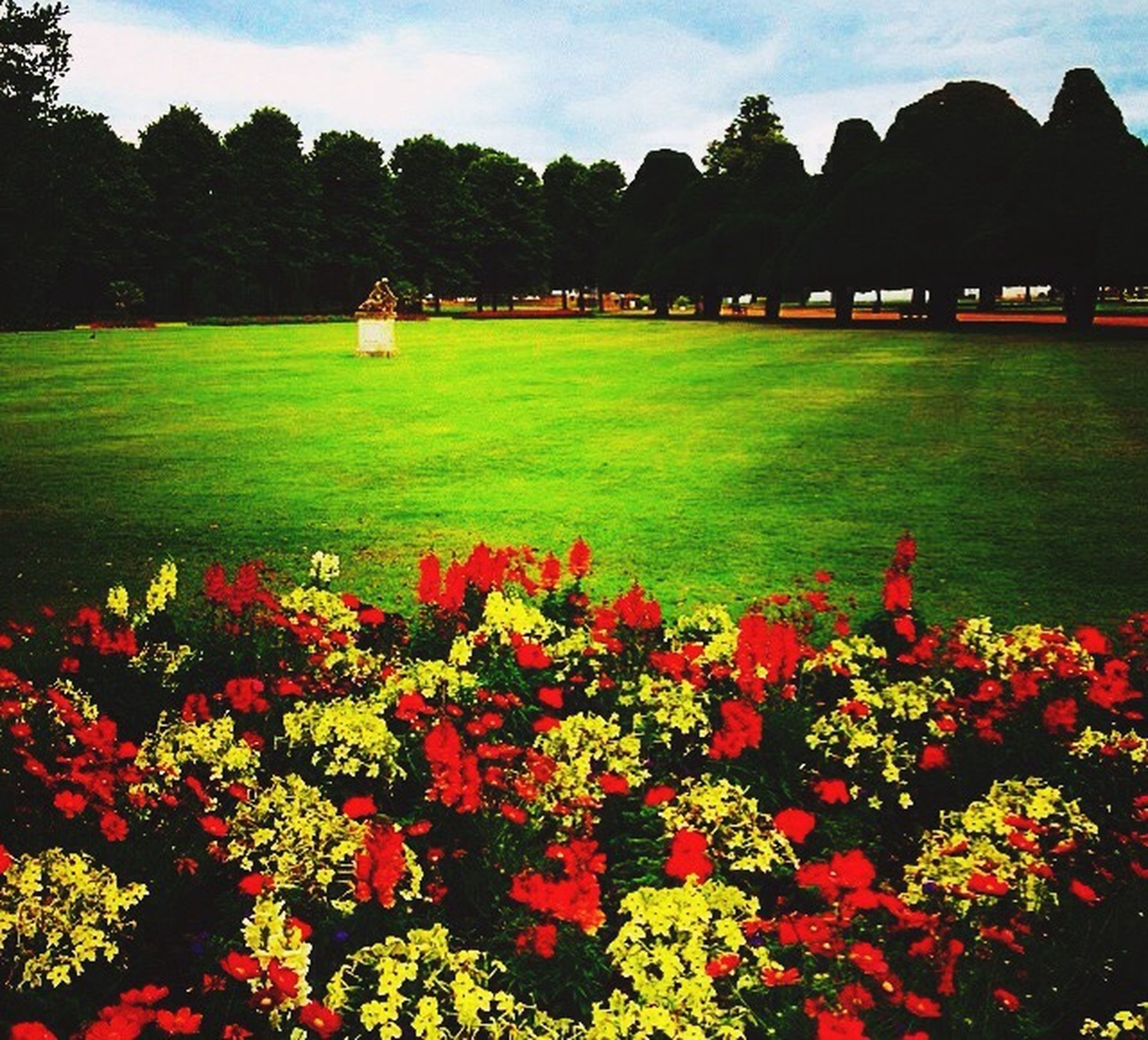 flower, beauty in nature, growth, field, sky, tree, grass, nature, landscape, tranquility, green color, red, tranquil scene, scenics, plant, freshness, park - man made space, built structure, fragility, lawn