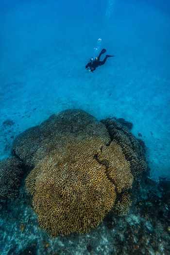 High angle view of scuba diver swimming by coral in sea