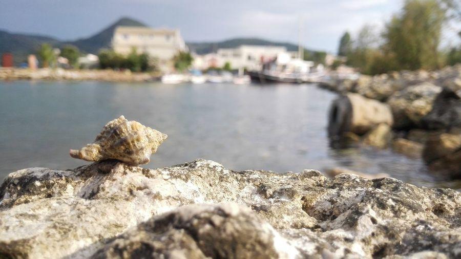 Sea Shell Bay