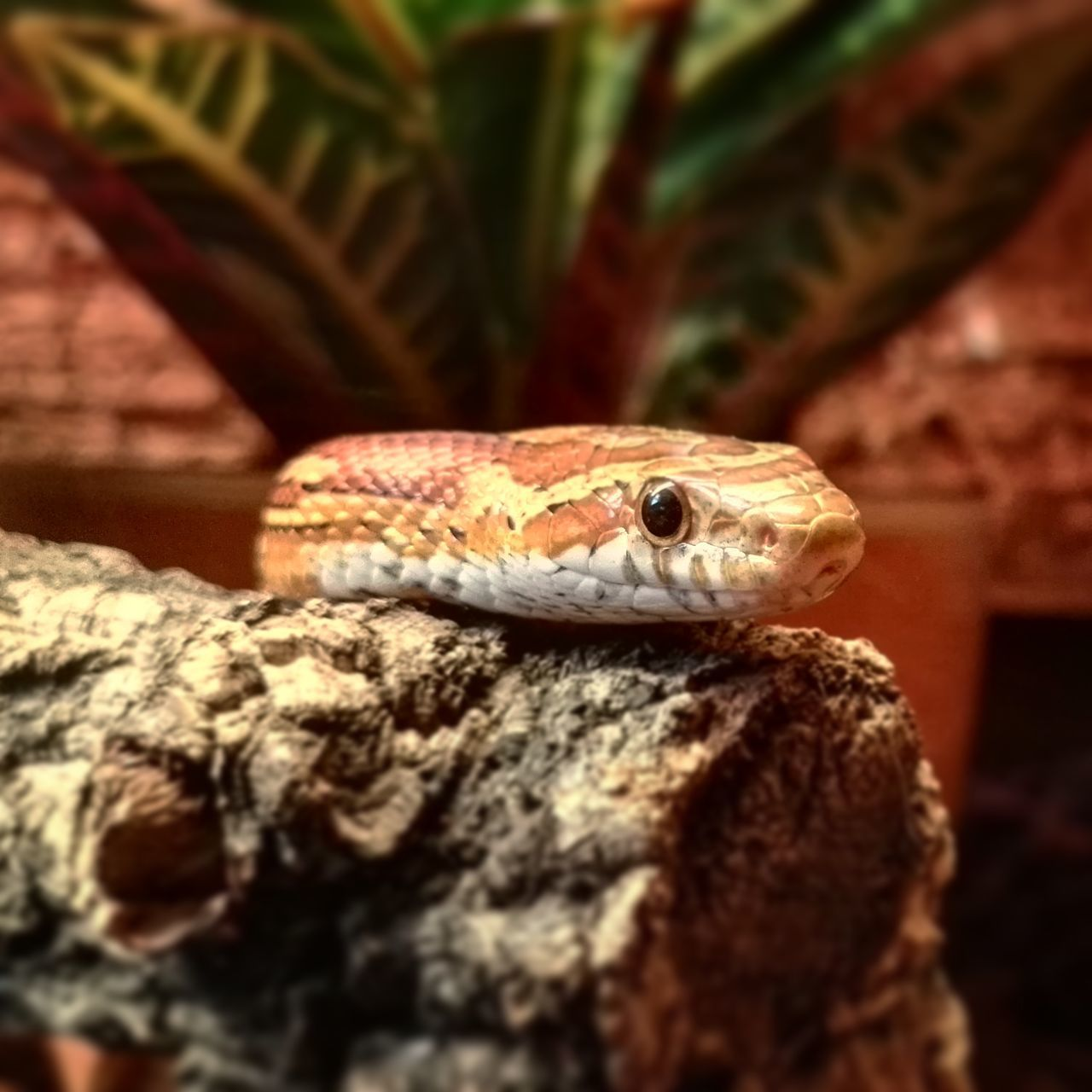 one animal, animals in the wild, animal themes, animal wildlife, reptile, close-up, selective focus, no people, nature, day, outdoors
