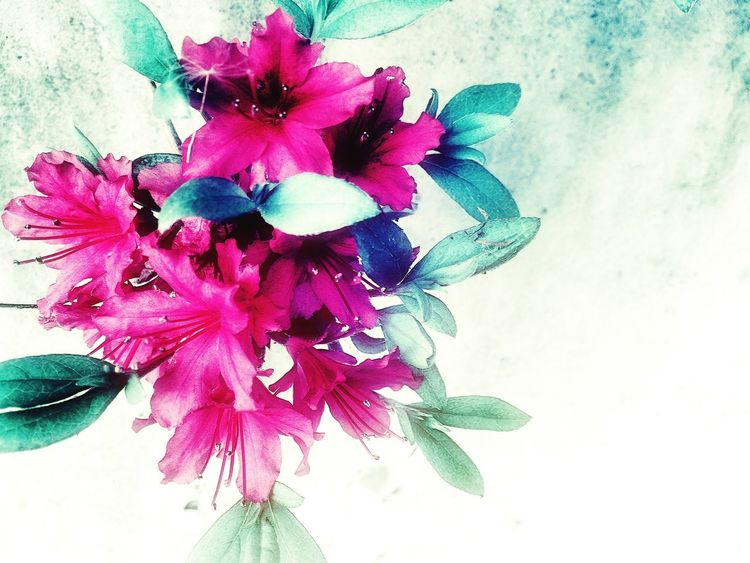 Hello World Color Colors Pink Flower つつじ Azalea Japan Japanese  Iphonegallery EyeEm Gallery Nature Peace