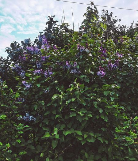 °Пусть всегда цветёт Flower Growth Nature Plant Fragility Freshness Blossom Outdoors Day Beauty In Nature No People Low Angle View Close-up Tree Sky Flower Head First Eyeem Photo