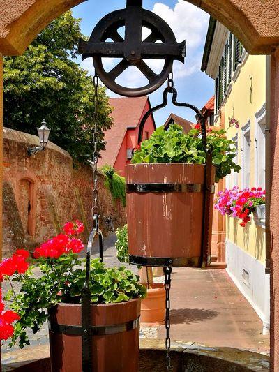 Public Fountain Historisch Historical Altstadt Old Town Brunnen Ziehbrunnen Water Flower Hanging Potted Plant Architecture Plant Sky Flower Pot Watering