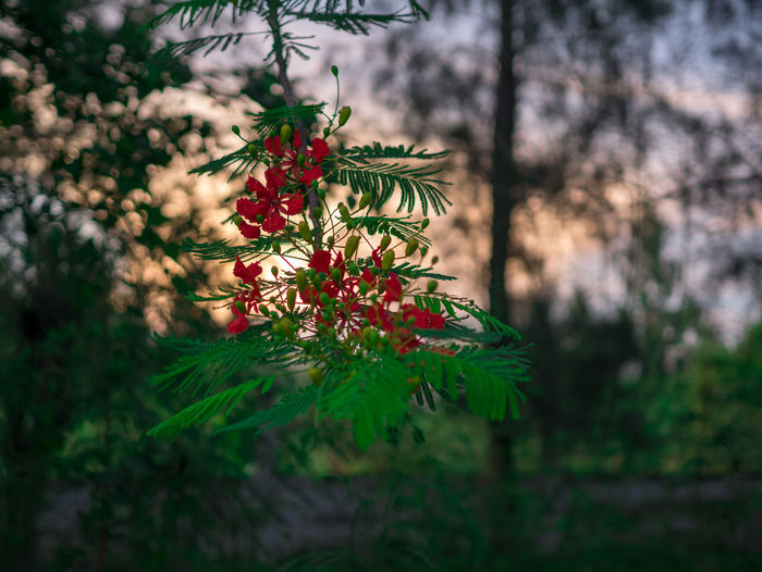 Thai view Plant Growth Beauty In Nature Tree Nature Day Selective Focus No People Green Color Focus On Foreground Outdoors Flowering Plant Flower Close-up Freshness Plant Part Tranquility Leaf Branch Vulnerability  Pine Tree Coniferous Tree