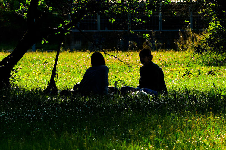 Rear view of friends sitting on grass against trees