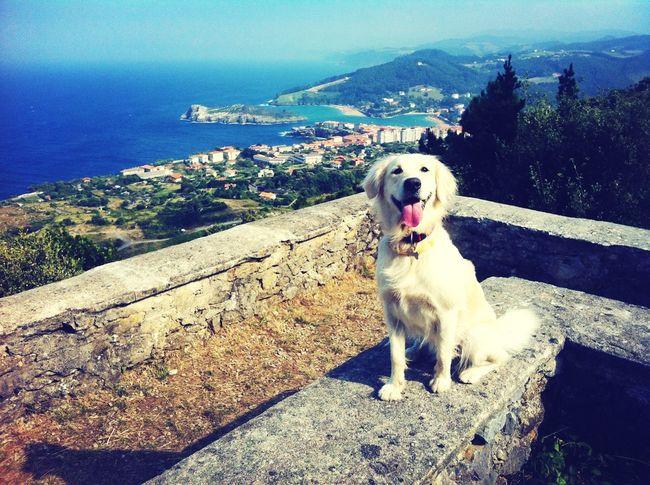 desde la talaia... Atalaiatik lekeitio osoa guretzat Enjoying Life With My Dog Taking Photos Sea