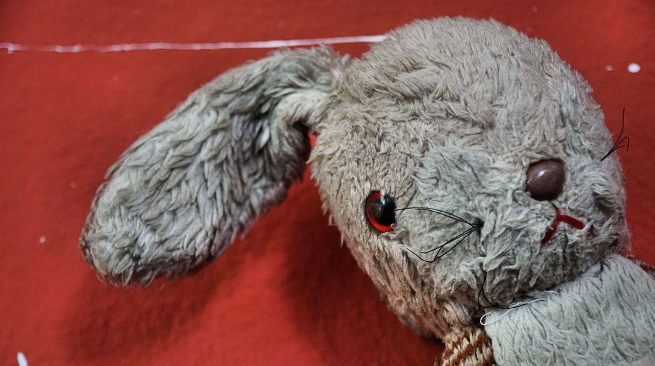 Aging Childhood Close-up Cuddly Toy Memories Plushie Rabbit Toys