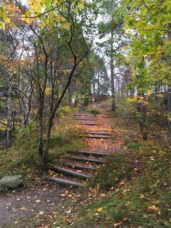 Stairs Wooden Trees Green Outdoors No People Woods Stones Leaves Up Nature Day Eriksberg Sweden Godaminnen
