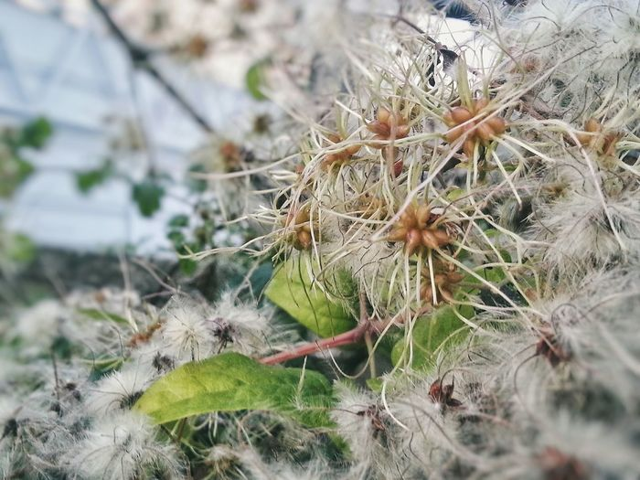 Nature Focus On Foreground Close-up No People Outdoors Growth Day Plant Fragility /Autumn 2017 is coming / Camera Zoom FX Android Photography Note 2 Smartphone Photography F1 Filter