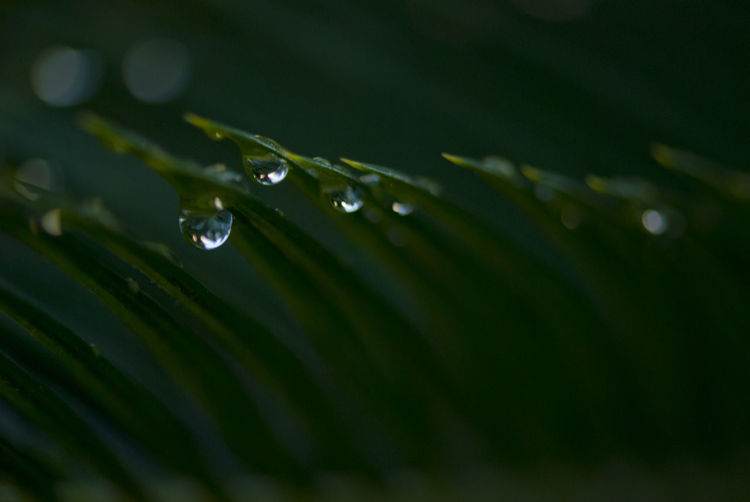 Close-up of water drops on grasses during rainy season