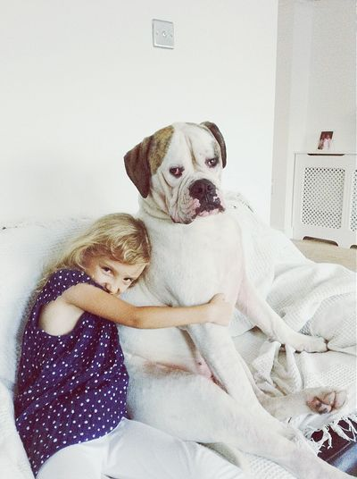 Dog❤ American Bulldog PostcodeRM15 Essex Lazy Day Mydog♡ Mydogiscoolerthanyourkids United Kingdom Check This Out Petstagram EyeEm Nature Lover EyeEm Pets