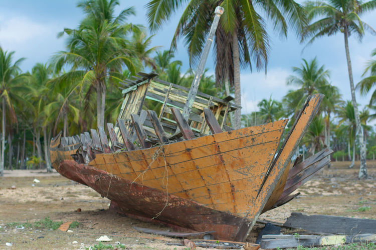 Abandoned boat against palm trees