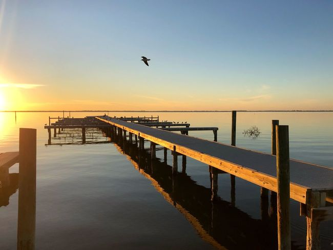Pier River Bird Sunset Water Animals In The Wild Pier Nature Bird Beauty In Nature Animal Themes Scenics Tranquil Scene Clear Sky Outdoors Sunlight Horizon Over Water Sky One Animal Silhouette Beach Animal Wildlife