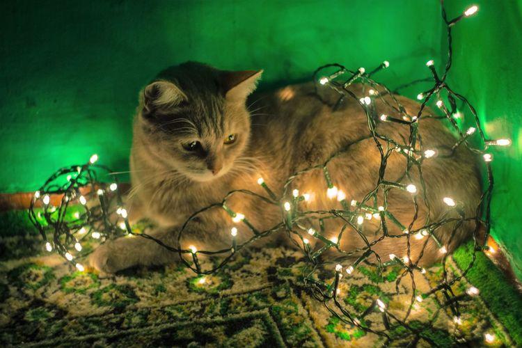 Close-up of cat sitting in illuminated room