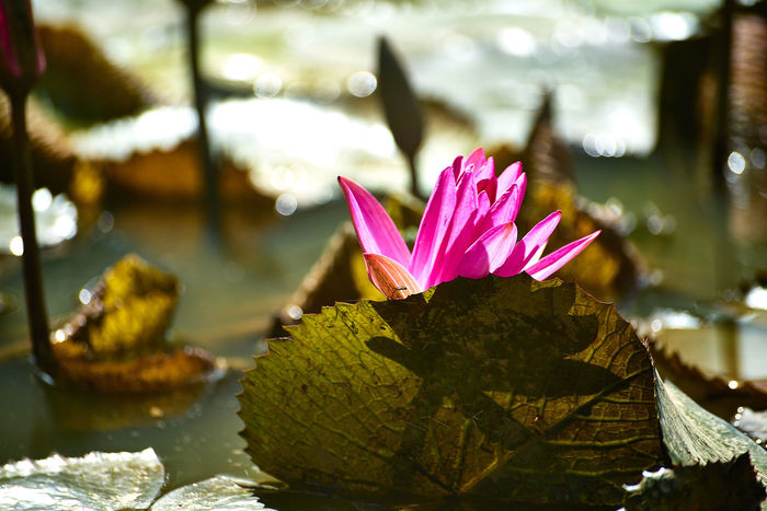 Beauty In Nature Blooming Growth Leaf Nature Photography Outdoors Plant Water