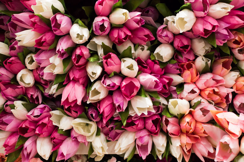 Flower Flowering Plant Beauty In Nature Pink Color Freshness Close-up Full Frame Petal Plant Inflorescence Flower Head Vulnerability  Backgrounds Fragility No People Large Group Of Objects Abundance High Angle View Flower Arrangement Bouquet Tulip Bunch Of Flowers Flower Market Valentine's Day - Holiday