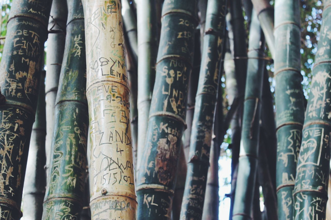 bamboo grove, tree trunk, bamboo - plant, no people, full frame, curtain, backgrounds, day, outdoors, close-up, nature