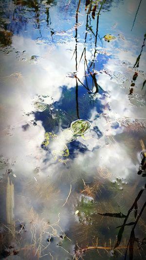 Beautiful Nature Frogs Macro Photography Mobile Photography Mobile Artist Popular Photos Nature Photography Nature_collection Nature Daily Photo