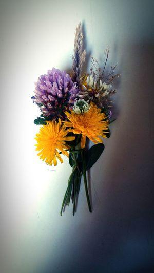 Flower Bouquet Wildflower Kidgifting Summertime Naturerox Backyardphotography Washington