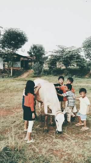 People Together Playing Together The Hapiest Children Playing Outdor Nature Nature Picture Playing Together With A Cow Kampoeng Smartphone Photography